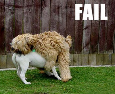 dog humping fail