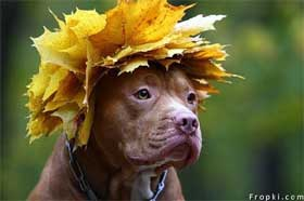 dog leaves on head