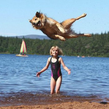 little girl on beach photobombed by dog