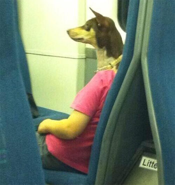 dog photobombs man on train