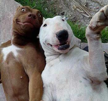 dogs take a selfie