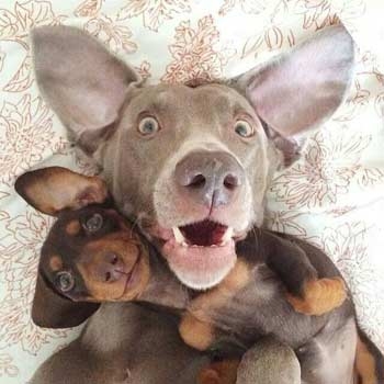cute dog pals take a selfie