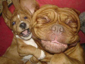 dog and puppy selfie