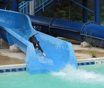 dog playing on water slide