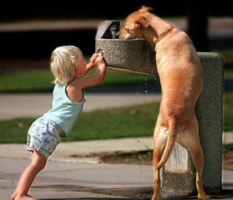 dog and child water fountain