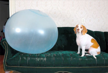 funny video clips of dogs playing with balloons