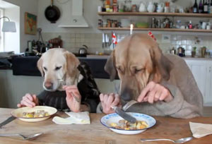 Funny Dog Video - A Dog's Dinner | D for Dog