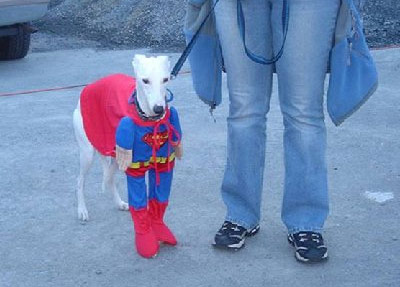 funny superman dog