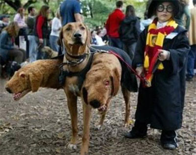 three headed Harry Potter dog costume