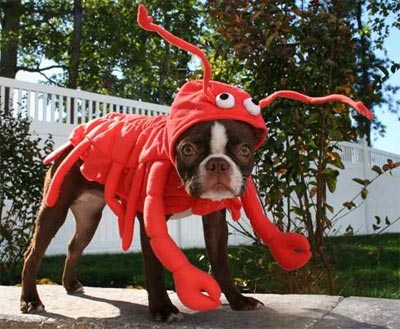 funny halloween pic dog lobster