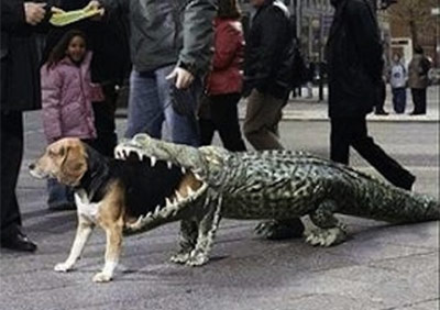 dog crocodile costume