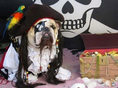 funny dog in pirate costume
