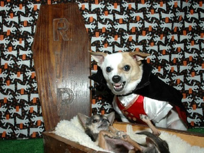 halloween vampire dogs with coffin