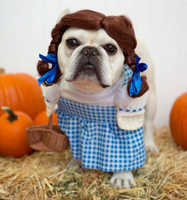 funny halloween pic Dorothy Wizard of Oz