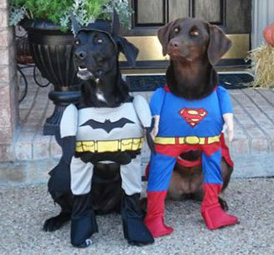 dogs dressed as batman and superman