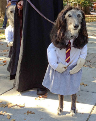 funny pic of dog dressed up