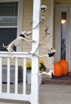 halloween funny skeleton dogs with human skeleton