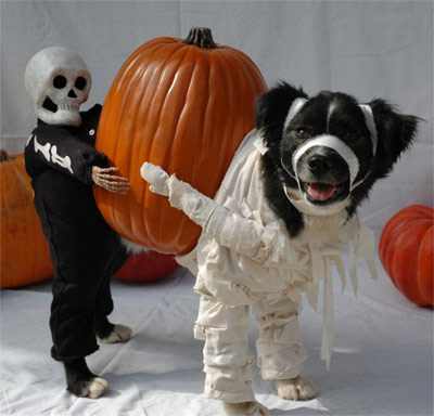 dog and pumpkin & Funny Dog Pics - Why Dogs Hate Halloween