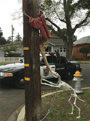 skeleton dog and skeleton man up tree