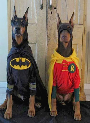 funny dogs in batman and robin suits