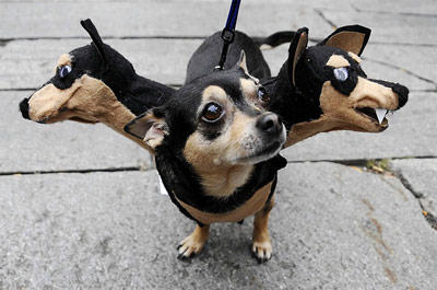 halloween funny three headed dog
