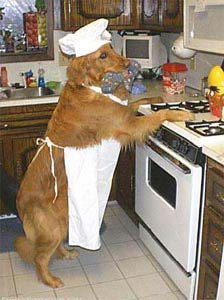 dog doing the cooking