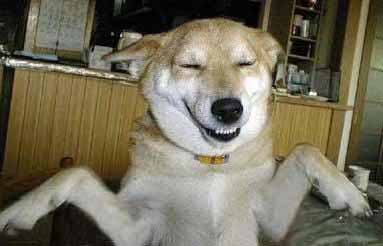 dog laughing