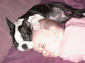 dog protect child