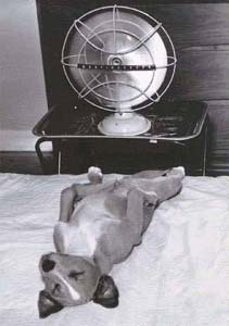 dog in front of a fan to keep cool