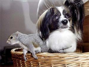 Squirrel adopted by dog