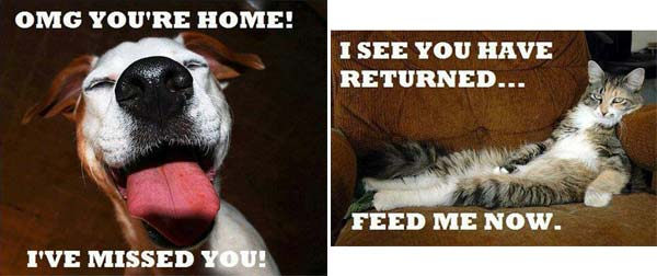 funny dog and cat pic