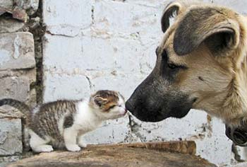cute dog and cat pic