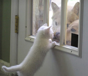 cute kitten looking at dogs