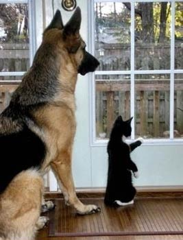 cute cat and dog pic