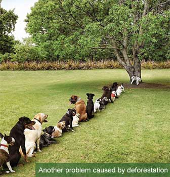 funny dog pic deforestation