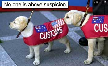 funny dog pic customs