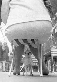 funny dog pic fat bum