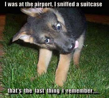 funny dog pic sniffer dog