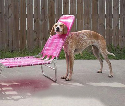funny dog stuck in lounger