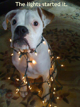 funny dog tangled in christmas lights