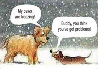 funny dogs in snow cartoon