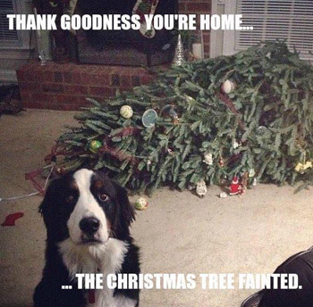 dog says the Xmas tree has fainted