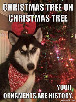 dog and christmas tree decorations
