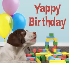 Happy Birthday Funny Dog Videos D For Dog