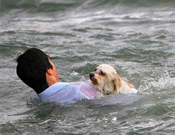 man helps dog in water