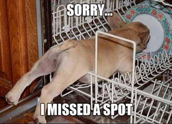 dog cleaning the dishwasher dishes