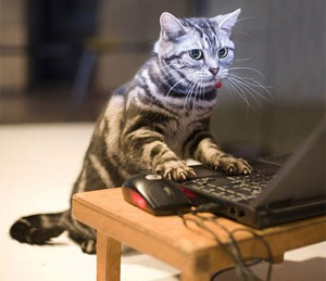 Image result for cat typing