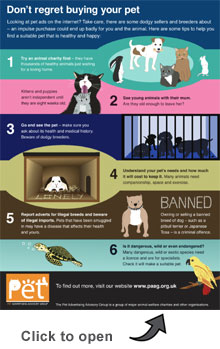 PAAG buying a pet online infographic
