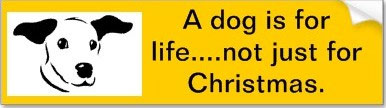 How Much Are Puppies From Dogs Trust