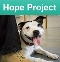 Dogs Trust Hope Project